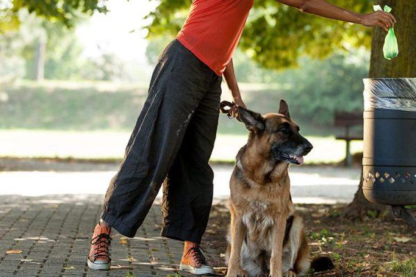 DinaForniture - Raccogliere le deiezioni canine